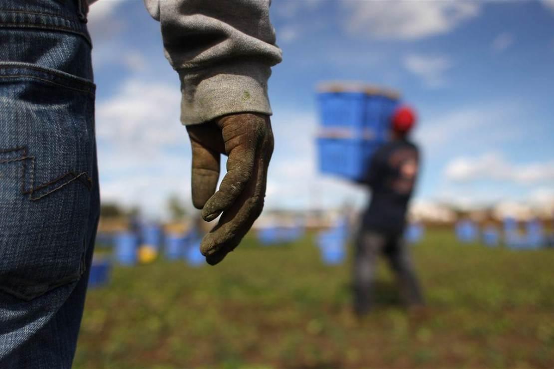foto braccianti agricoli