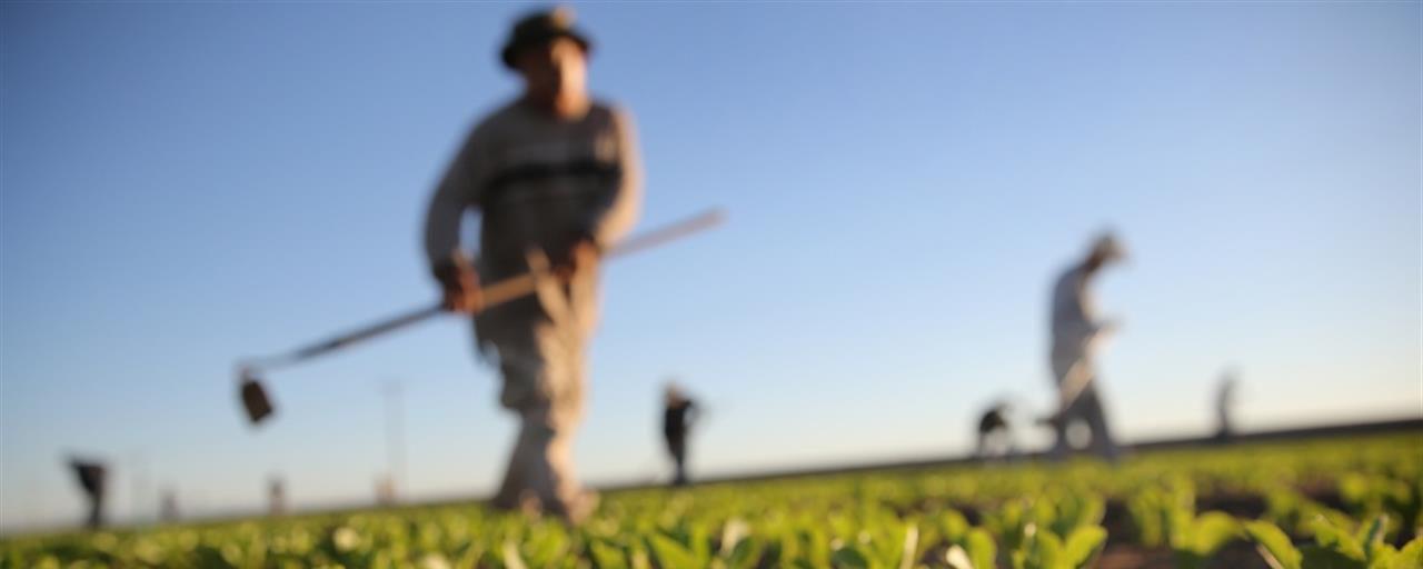 foto campi agricoli
